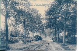 Oostmalle Dreef Van Blommerschot - Malle