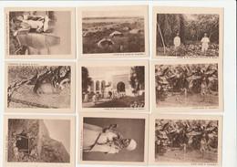 9 IMAGES INDOCHINE,ANTILLES FRANÇAISE,COCHINCHINE,CHARMEUR DE SERPENTS,NOUVELLE CALÉDONIE,ALGÉRIE,MAROC,AFRIQUE......... - Other