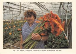 Métiers - Horticulture - Fleurs Gerberas Sous Serre - Lanourzel - Autres