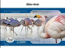 Sierra Leone 2019, Animals, Water Birds, Flamingo, BF - Flamingo