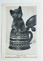 RPPC Cute Kitten Cat Cup Tierschutzverein Antique Vintage Real Photo Postcard - Cats