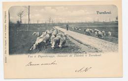 Turnhout: Vue A Papenbrugge, Chaussée De Thielen à Turnhout *** - Turnhout