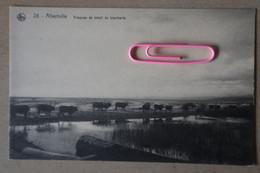 ALBERTVILLE : Troupeau De Bétail De Boucherie - Belgian Congo - Other