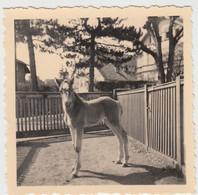 (F6159) Orig. Foto Junges Pferd, Fohlen, Ort Unbekannt, 1950er - Otros