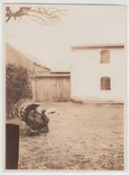 (F6182) Orig. Foto Truthahn A.d. Hof, Kuhberg-Wanderung 1928 - Otros