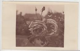 (F6303) Orig. Foto Rosen In Sepia, Foto Als Glückwunschkarte 1920er - Otros