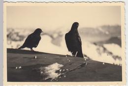 (N66) Original Foto Bergdohlen, 1940er - Otros