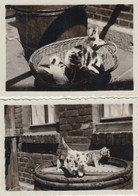 (F8758) 2x Orig. Foto Junge Katzen Auf Fass, Im Körbchen, 1930er - Otros