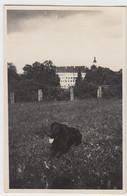 (F9030) Orig. Foto Großer Hund Auf Wiese, Möglw. Königseggwald, 1920/30er - Otros