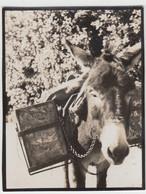 (F9755) Orig. Foto Esel, Lastesel, Vor 1945 - Otros