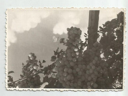 Grapes W780-501 - Otros