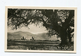 Israel : Galileean Mountains With Mt. HERMON, Mont Hermon, Mount Hermon - Israele