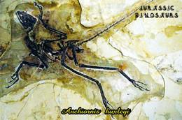 Carte Postale, Animaux Prehistoriques, Jurassic Dinosaurs, Anchiornis Huxleyi - Altri