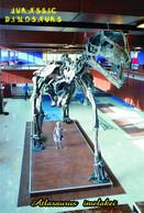 Carte Postale, Animaux Prehistoriques, Jurassic Dinosaurs, Atlasaurus Imelakei - Altri