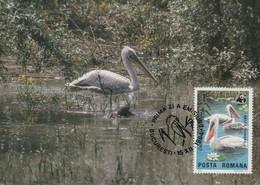 CARTE MAXIMUM - MAXICARD - MAXIMUM KARTE - MAXIMUM CARD - ROUMANIE - DALMATIA PELICAN - Pelicanus Crispus - Pelicans