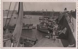 Quiberon : Port Maria - Débarquement De La Sardine (CPA Vierge) - Quiberon