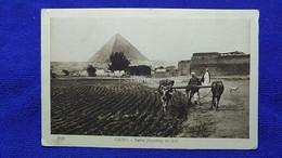 Cairo Native Ploughing The Field Egypt - Caïro