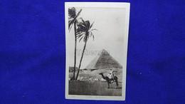 Cairo The Pyramids Egypt - Caïro