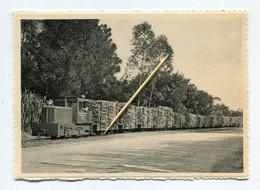 Congo Belge : Compagnie Sucrière Congolaise - Loco Diesel Remorquant Un Train De Cannes. Ed. Thill. - Belgian Congo - Other