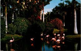 Florida Sarasota Jungle Gardens Colorful Flamingos - Sarasota