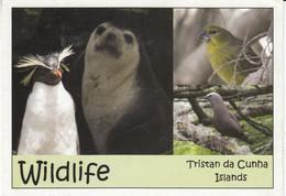 Tristan Da Cunha Postcard  Wildlife Tristan Da Cunha Ca Tristan Da Cunha 26 AU 2020 (F8896) - Tristan Da Cunha