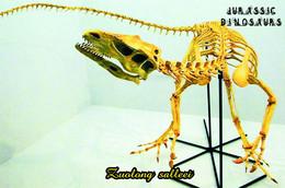 Carte Postale, Animaux Prehistoriques, Jurassic Dinosaurs, Zuolong Salleei - Altri