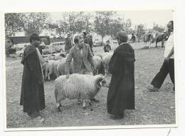 10x15  Achat D'un Belier Pour L'aid   Carte De L'Aventure Carto   En 1978 - Tanger