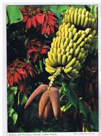 ESPAGNE - CANARY ISLANDS - TENERIFE - Bananas And Poinsettia - Tenerife