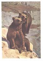 Russia:Moscow Zoo, Brown Bears, 1963 - Bears