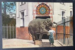 Basel Zoologischer Garten/ Elefant (Miss Jenny) - BS Bâle-Ville