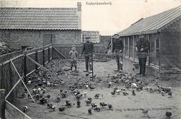 Belgique - Colombophilie - Elevage De Pigeons - Kiekenkweekerij - Endroit à Identifier - Edition G. Wauters Cruyshautem - Non Classés