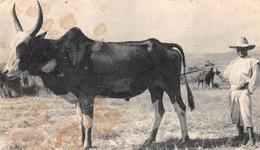 CPSM Moutarde AMORA - Dans Le Sillage De BOUGAINVILLE. X - MADAGASCAR - Timbrée, Oblitérée 1955 ( ͡◕︵ ͡◕) ♠ - Publicité