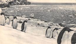 CPSM Moutarde AMORA - Dans Le Sillage De BOUGAINVILLE. II - ILES FALKLAND Timbrée, Oblitérée 1955 ( ͡◕͜ʖ ͡◕) ♦ - Publicité