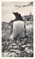 CPSM Moutarde AMORA - FALKLAND - PINGOUIN ET SON POUSSIN   Timbrée, Oblitérée 1952 ( ͡◕͜ʖ ͡◕) ♦ - Publicité