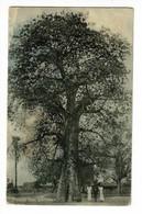 Baobab Tree - Ghiromo (animation) Circ 1926, Echange Collectionneurs (voir Tampon Club R.E.C.P) - Malawi