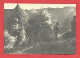 C.P.M. « PAYSANS  » Le Battage Du Blé Dans Le Cantal En 1949 Jolie Animation   X2 Phts - Paysans