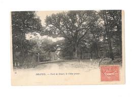 Draveil - Forêt De Senart , Le Chêne Prieur - AIB071 - Draveil
