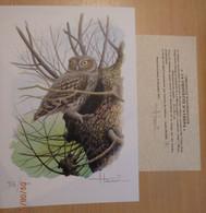 A.Buzin Genummerde Tekening 87/400 Met Certificaat Steenuil - 1985-.. Birds (Buzin)