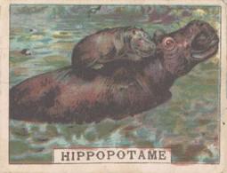 CHROMO CHOCOLAT PUPIER SAINT-ETIENNE HIPPOPOTAME - Other