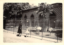 Anvers - Zoo - Places