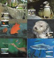 Portugal 2004 Complete Series 6 Maximum Card Lisbon Oceanarium Fauna Animal Shark Fish Penguin Bird Otter Mammal - Altri