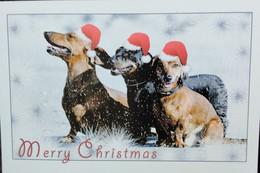 Carte Postale       Postcard   Chien   Dog   Hund - Dogs