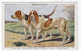 CHIENS - Briquets D'Artois - Hunde