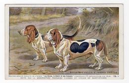 CHIENS - Bassets D'Artois à Jambes Droites - Hunde