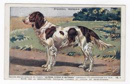 CHIENS - Epagneul Français - Hunde
