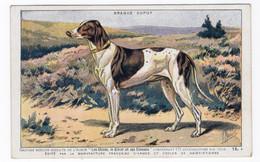CHIENS - Braque Dupuy - Hunde