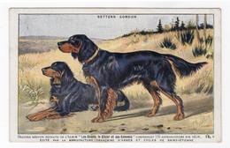 CHIENS - Setters Gordon - Hunde