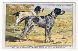 CHIENS - Braques Bleus D'Auvergne - Hunde