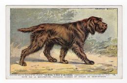 CHIENS - Griffon Boulet - Hunde