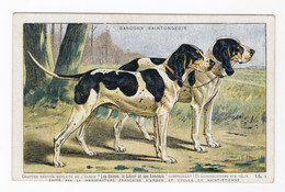 CHIENS - Gascons Saintongeois - Hunde
